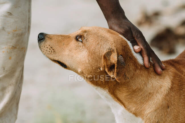 Unrecognizable poor African person stroking fur of stray dog on street of town in Gambia — Stock Photo
