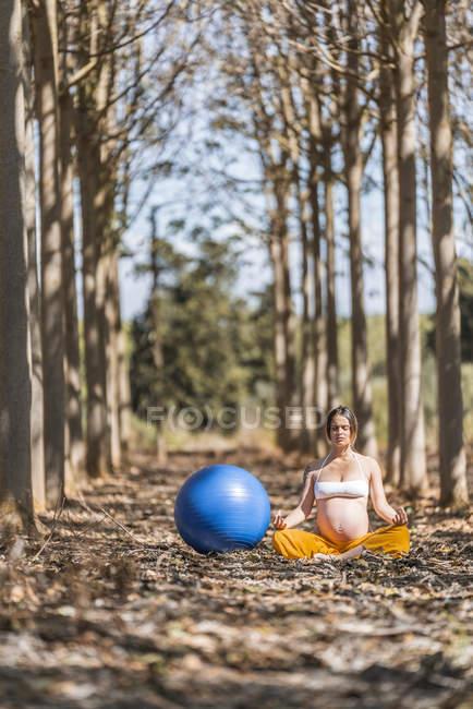 Mulher grávida adulta serena meditando por bola de fitness azul grande enquanto sentado no chão entre árvores no parque — Fotografia de Stock