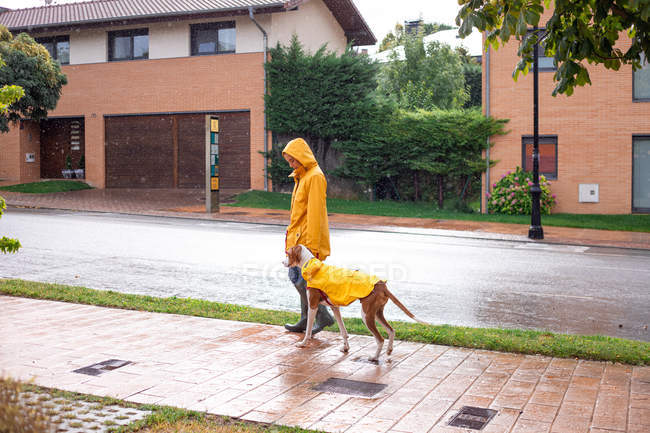 Side view of woman in yellow jacket and rubber boots walking with English Pointer dog in yellow cloak on leash in rain on street — Stock Photo