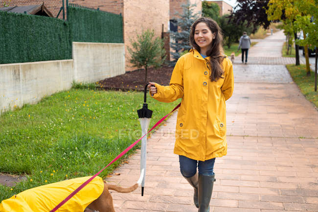 Woman in yellow jacket walking with English Pointer dog in yellow cloak on leash in rainy weather in street — Stock Photo