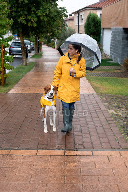 Woman in yellow jacket and rubber boots walking with English Pointer dog in yellow cloak on leash in rainy weather in street — Stock Photo