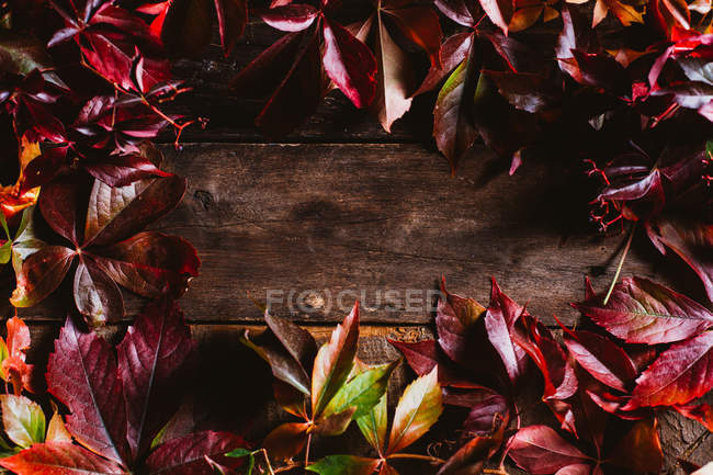 From above wooden surface with bright red orange yellow autumn leaves with copy space — Stock Photo