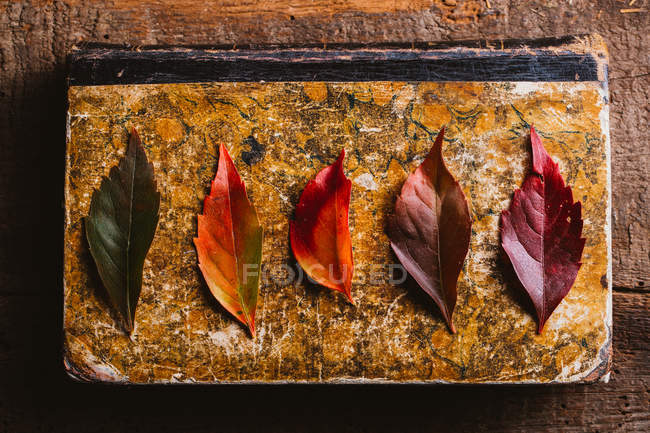 From above aged vintage book with bright red orange yellow autumn leaves on wooden table — Stock Photo
