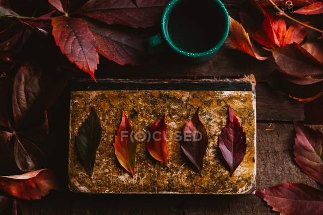 From above aged vintage book with bright red orange yellow autumn leaves and green cup with drink on wooden table — Stock Photo