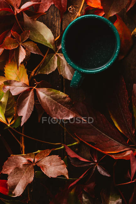 From above green cup surrounded by autumn colorful leaves with drink on wooden table — Stock Photo