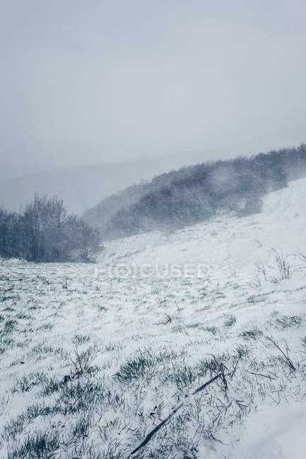 Winter foggy landscape of meadow with grass covered by snow and hills with trees in cloudy gloomy weather — Stockfoto