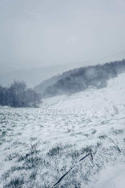 Winter neblige Landschaft von Wiesen mit Schnee bedeckt und Hügeln mit Bäumen in bewölkten düsteren Wetter — Stockfoto