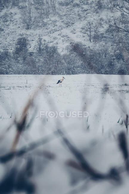 Malerischen Winter Blick auf Schnee Ebene und Berg mit einsamen Weißstorch in bewölkten nebligen Wetter — Stockfoto