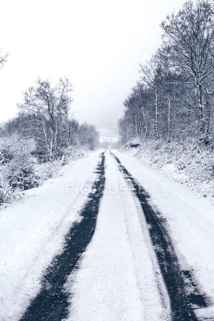 Snow covered empty country road with traces of cars leading away and forest along roadway in cloudy gloomy winter weather — Stock Photo