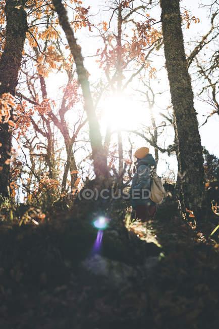 Снизу вид на неузнаваемую женщину, гуляющую в осеннем лесу среди деревьев — стоковое фото