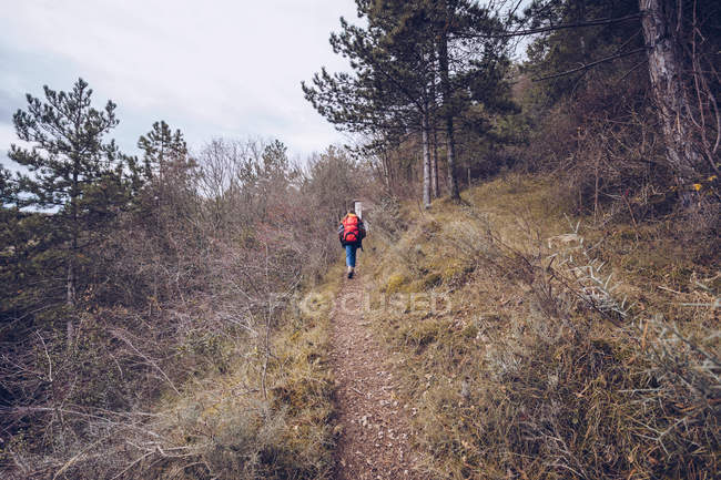 From behind hiker with backpack walking along road with dried leaves by bare trees — Stock Photo