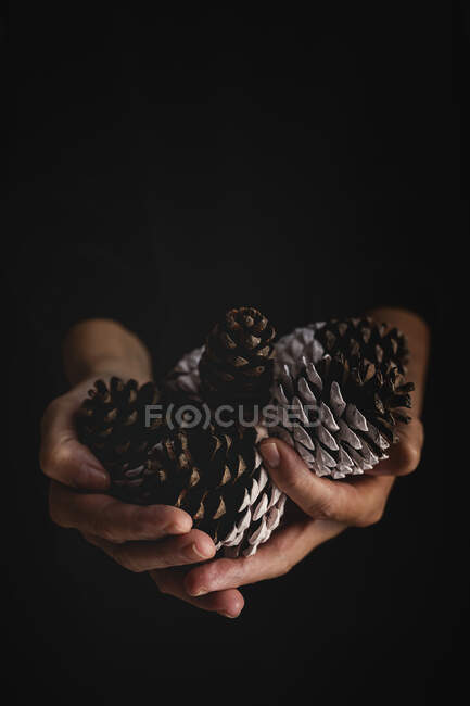 Crop person with handful of conifer cones — Stock Photo