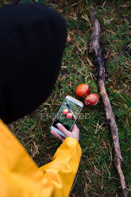 De cima de mulher tirando foto de amanita vermelha perto de pau na grama na floresta — Fotografia de Stock