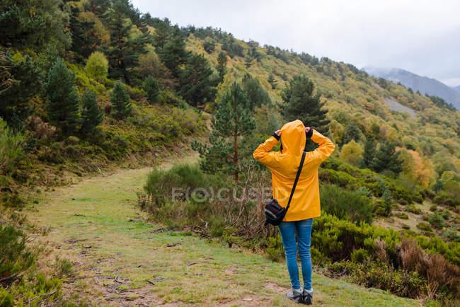 Vista posterior de la mujer en impermeable amarillo caminando en el bosque - foto de stock