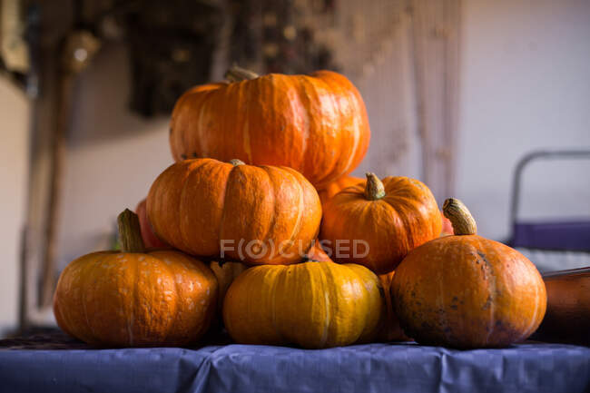 Collection of big and small shiny orange pumpkins with thick stalks arranged on table with violet tablecloth against blurred wall of apartment — Foto stock