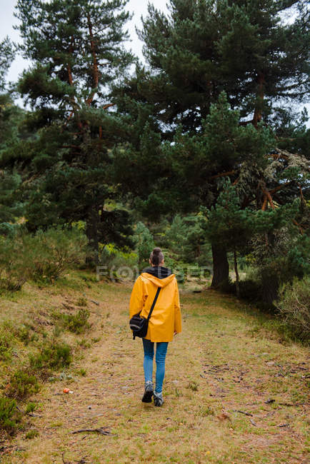Back view of woman in yellow raincoat walking in forest — Stock Photo