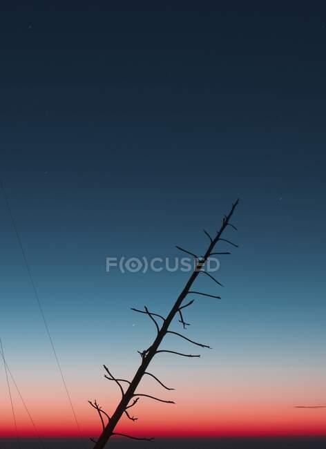 Silhueta de tronco de árvore com ramos sem folhas que se inclinam contra o céu de pôr-do-sol brilhante no campo — Fotografia de Stock