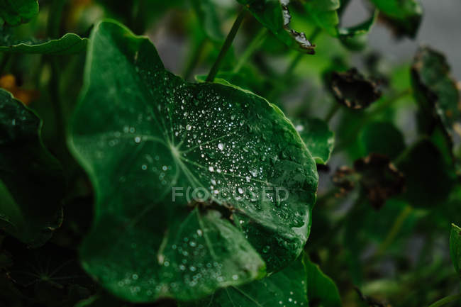 Close-up of wet green leaves with water droplets after rain on forest floor — Fotografia de Stock