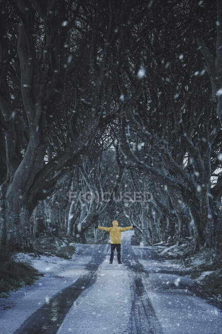 Unrecognizable person on beech trees tunnel in winter day — Stock Photo