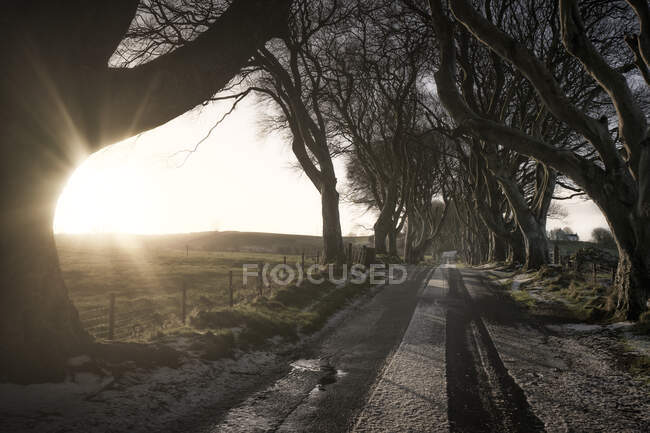 Road with light covering of snow running through Dark Hedges avenue of big leafless beech trees with interlacing branches in cloudy day — Stock Photo