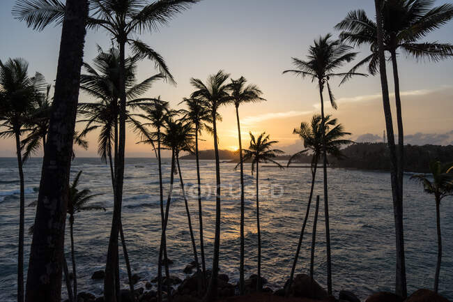 Exotic ocean sandy hill with palms — Stock Photo