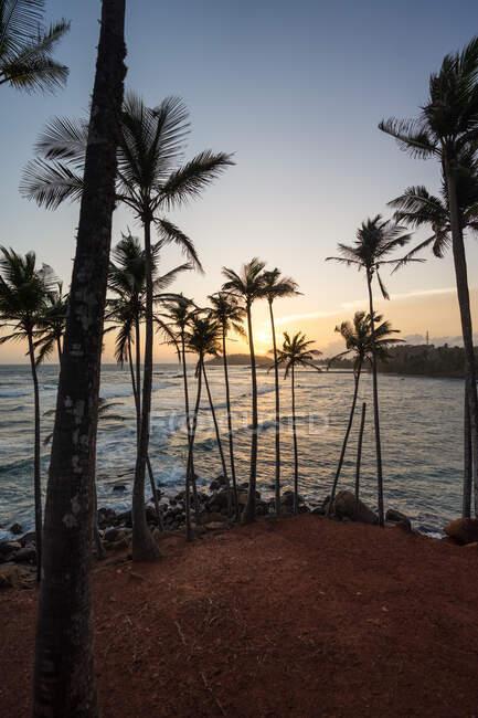 Oceano esotico collina sabbiosa con palme — Foto stock