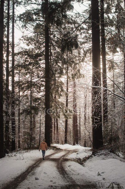Person walking on snowy road in forest — Stock Photo