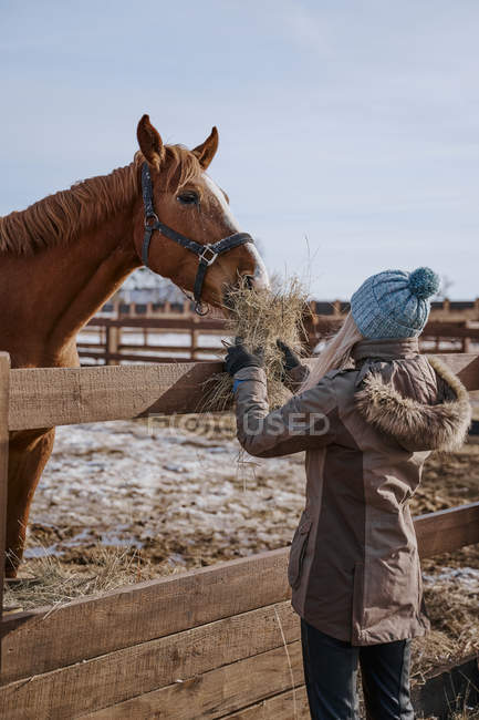 Side view of luxurious horse in bridle and woman in warm hat and jacket feeding by hay at yard in bright daytime — Stock Photo