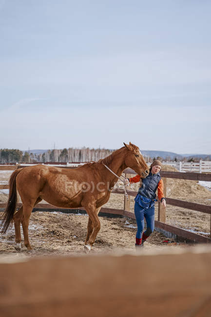 Worker caring for brown horse in open yard — Stock Photo