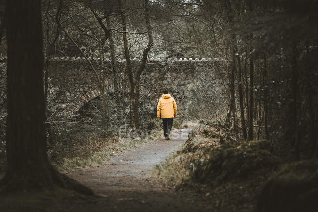 Back view of male traveler in bright orange jacket walking on pathway next to old stone bridge while visiting Tollymore Forest Park in Northern Ireland in spring day — Stock Photo
