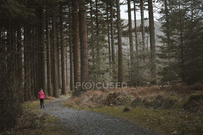 Вид на анонимную женщину-путешественницу в теплой куртке, гуляющую по лесу во время посещения лесного парка Толлимор в Северной Ирландии весной — стоковое фото