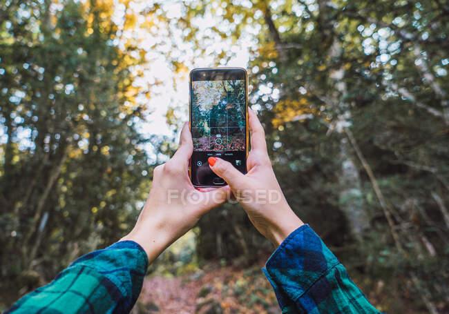 Dal basso delle mani del raccolto in camicia a quadri scattare foto di alberi autunnali sul telefono cellulare con boschi su sfondo sfocato — Foto stock