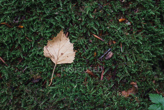 Fallen dry leaves covering green grass of lawn in peaceful autumn park in London — Stock Photo