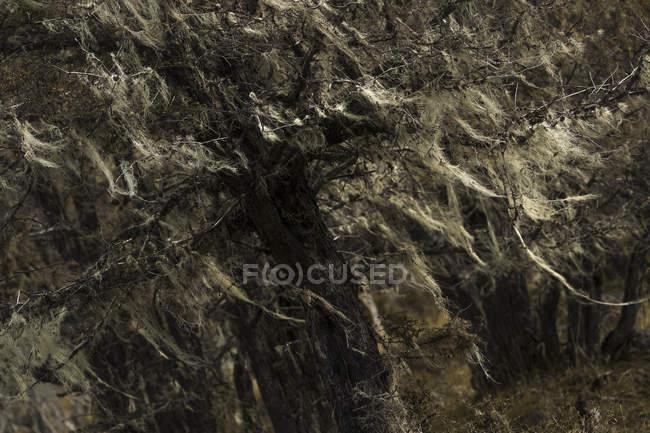 Texture abstraite de crevasses pierreuses dans les montagnes du parc national du Cerro Castillo, Chili — Photo de stock