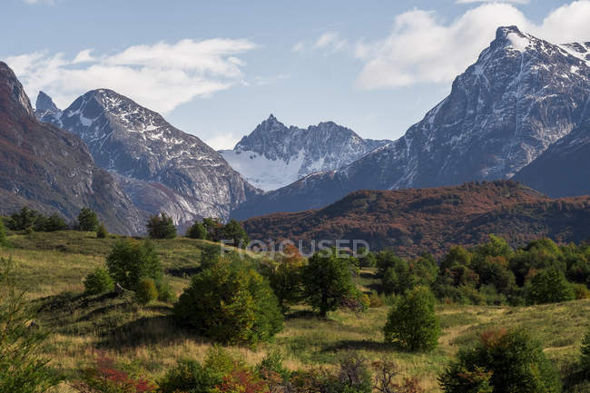 Small evergreen trees in valley with dry grass surrounded by snowy mountains under cloudy sky in Chile — Foto stock