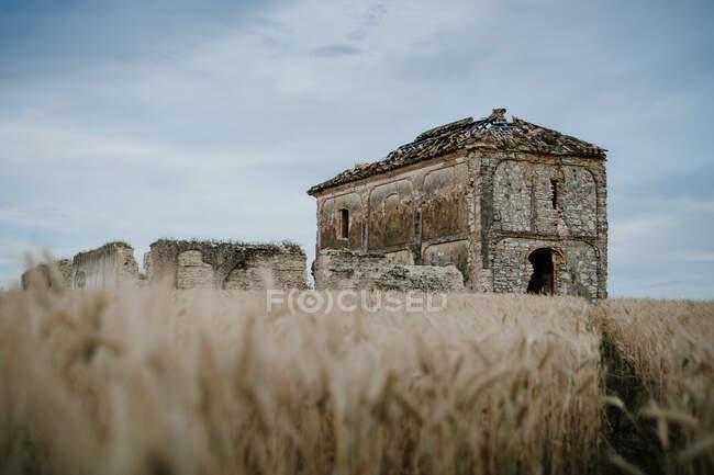 Покинутий похилий клуні з огорожею серед порожньої землі золотої пшениці з ясним синім небом на задньому плані — стокове фото
