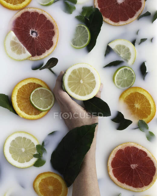 Arm holding wedge of lemon amid segments of citrus fruits in milk bath — Stock Photo