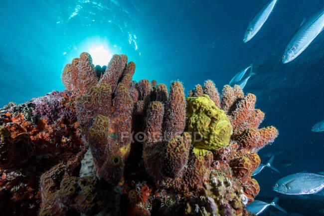 Coraux mous et poissons sur récif — Photo de stock