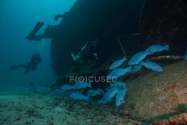 Plongeurs explorant naufrage dans l'océan — Photo de stock