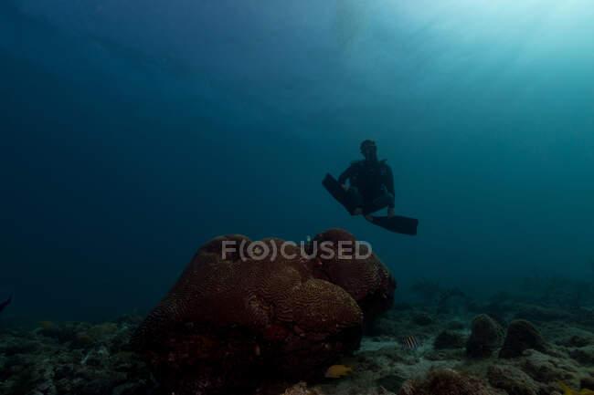 Diver swimming in deep ocean among aquatic vegetation — Stock Photo
