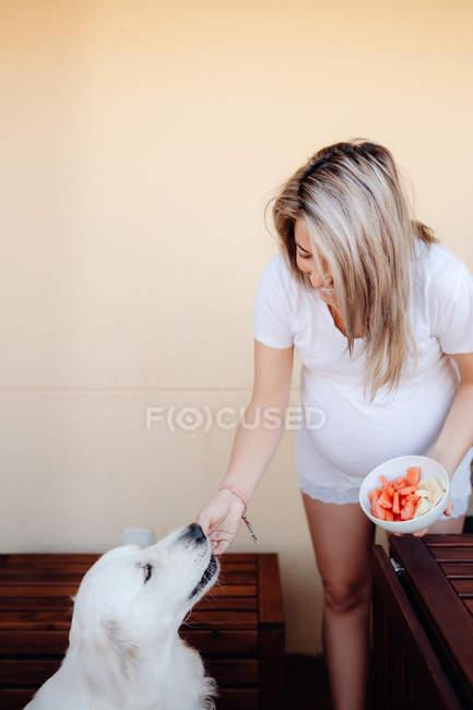 Блестящая беременная блондинка дарит лабрадору кусок свежего арбуза на домашней террасе днем — стоковое фото