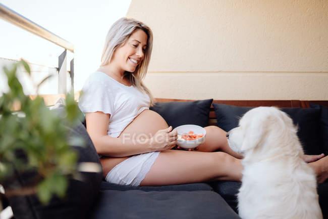 Веселая беременная блондинка в белой домашней одежде кормит лабрадора куском банана из миски — стоковое фото