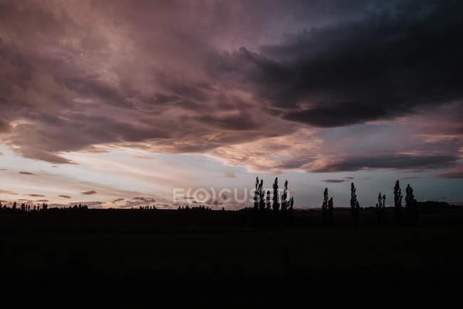 Silhouette sombre de champ avec herbe et fleurs sous le ciel nuageux violet du soir en Nouvelle-Zélande — Photo de stock