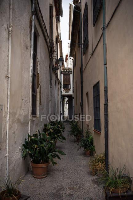 Antigua calle adoquinada estrecha con plantas en macetas. - foto de stock