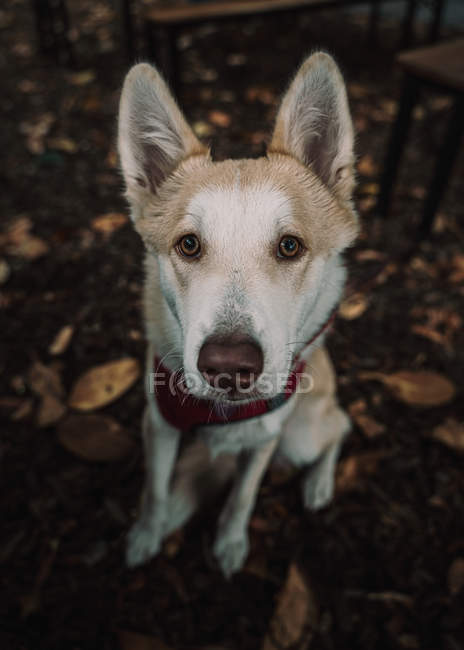 Adorable mixed breed dog lying on ground in street — Stock Photo