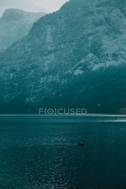 Paisaje sereno con un baño en agua cristalina y tranquila que refleja el cielo y las montañas nevadas en un día brillante en Hallstatt. - foto de stock