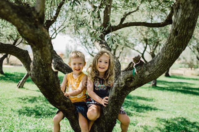 Playful children climbing tree on sunny green meadow — Stock Photo