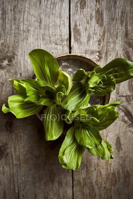 Vista dall'alto di fresco bok choy maturo posto su scatola rotonda temprato su tavolo di legno — Foto stock