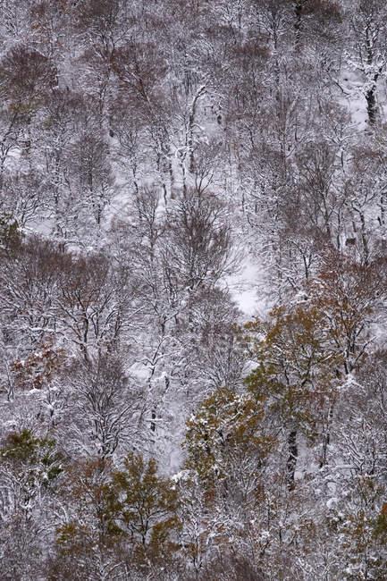 Forêt de hêtres couverte de neige et de glace dans un paysage brumeux dans le nord de l'Espagne Montagnes — Photo de stock