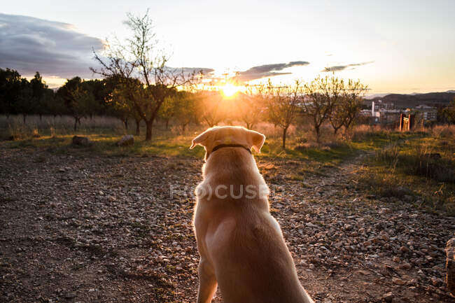Dog in collar sitting on ground and enjoying sundown while spending time in nature — Stock Photo